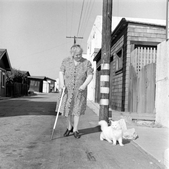 un chat guide une aveugle dans la rue