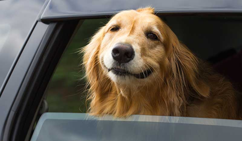 Taxi : 2 chauffeurs refusent un aveugle et son chien guide